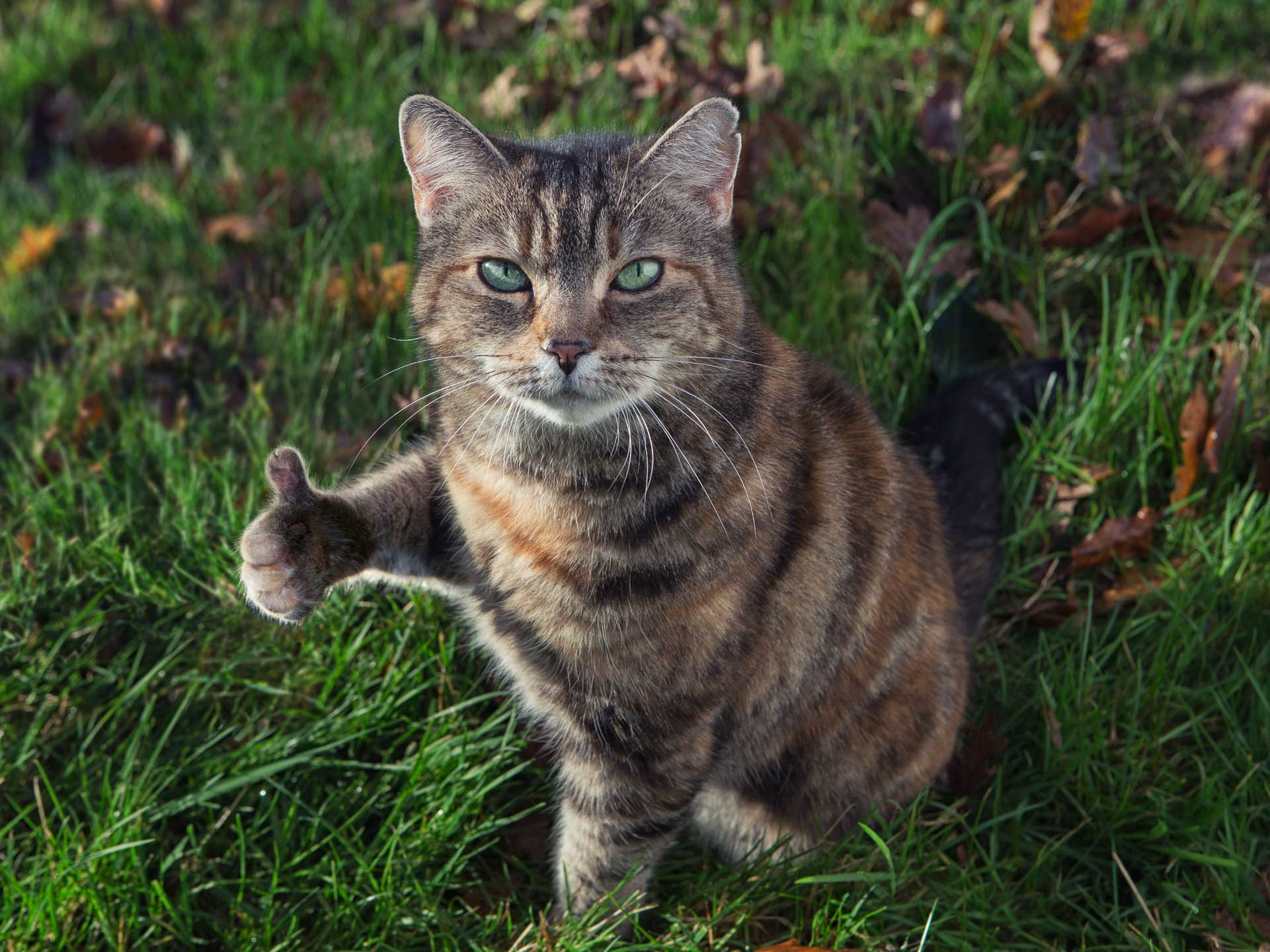 Alex Howe animals cat thumbs up indignant not fussed in grass garden
