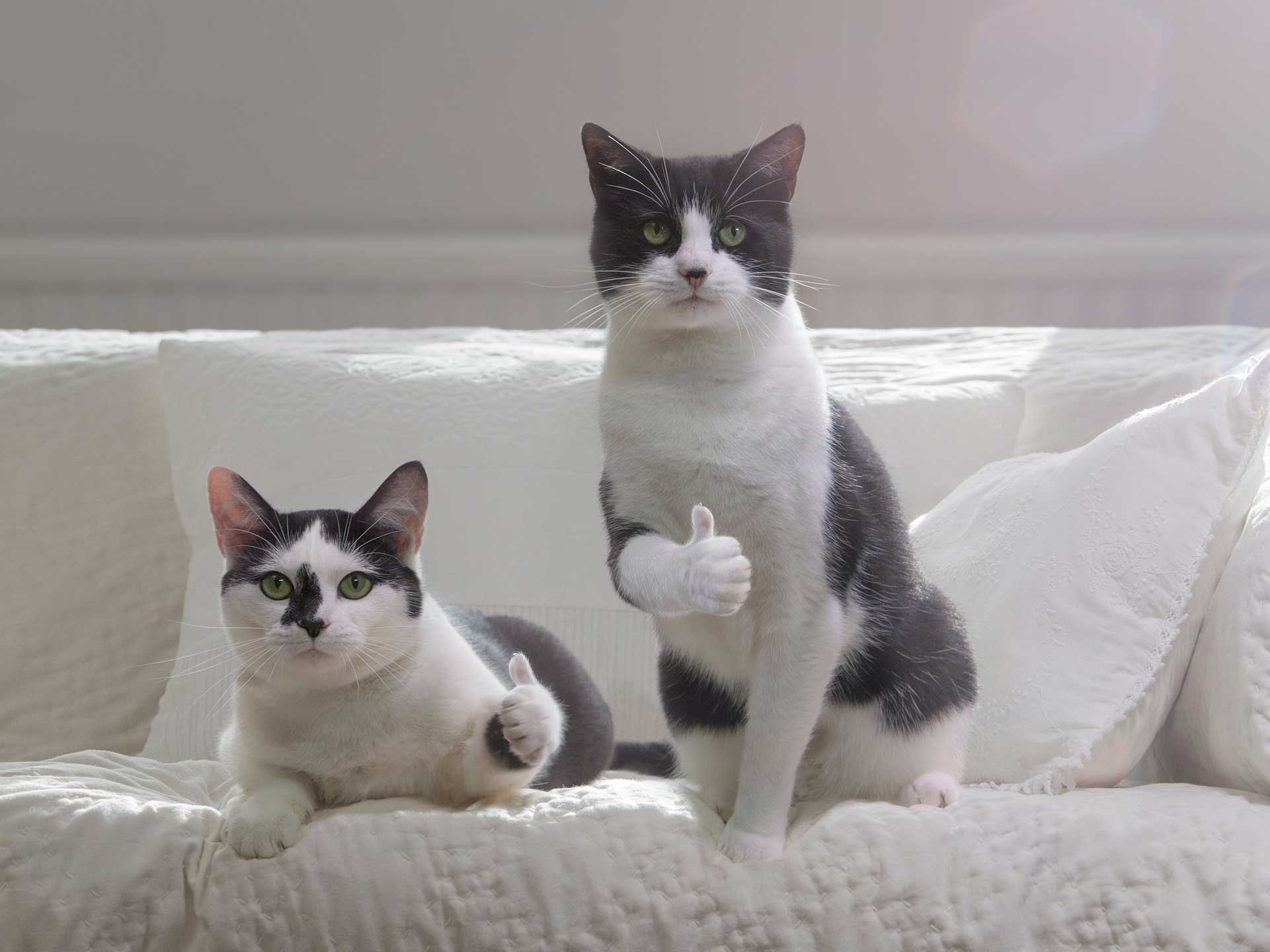 Alex Howe black and white cats thumbs up twins at home on sofa