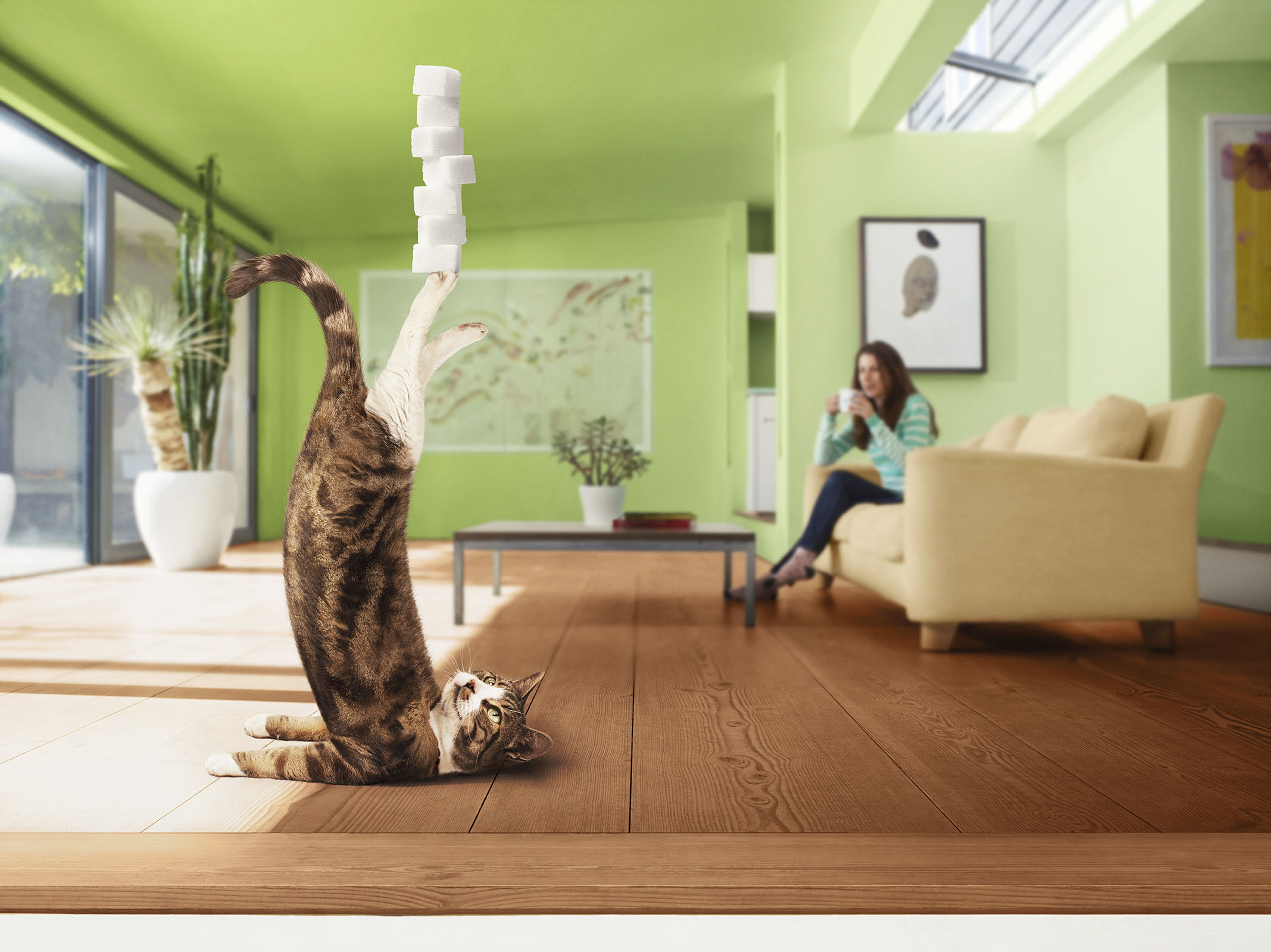 Alex Howe animal yoga cat balancing sugar cube lump in house with owner