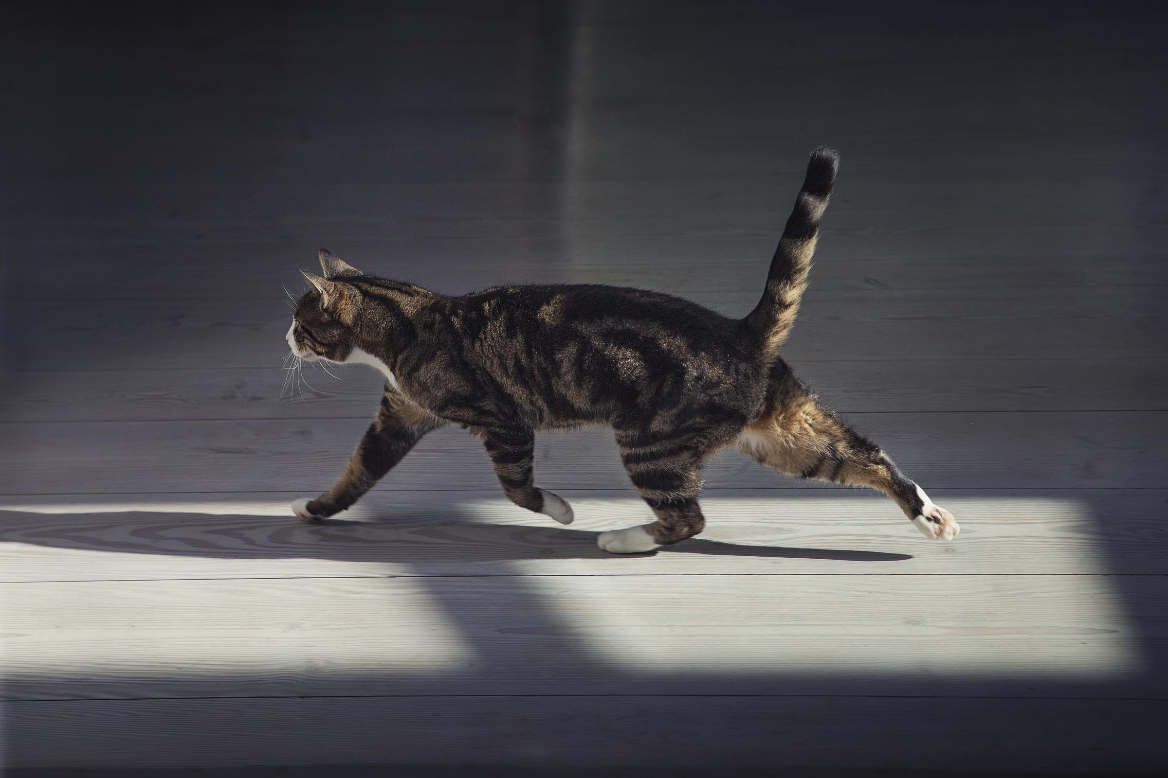 Alex Howe animal walking cat in window light shadow