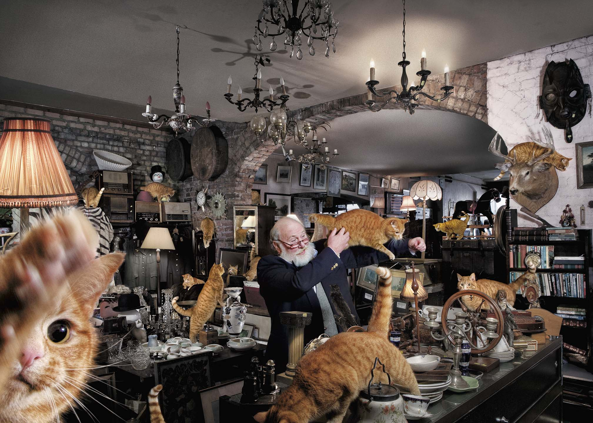 Alex Howe animal cats old man antique store crazy cat man
