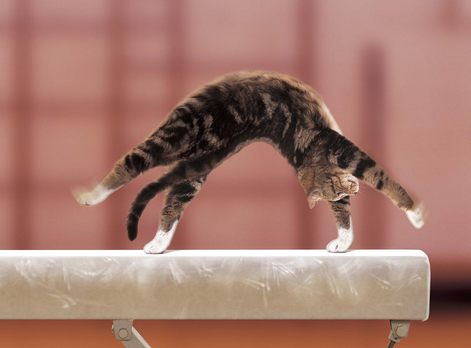 Alex Howe animal gymnast cat on bar somersault