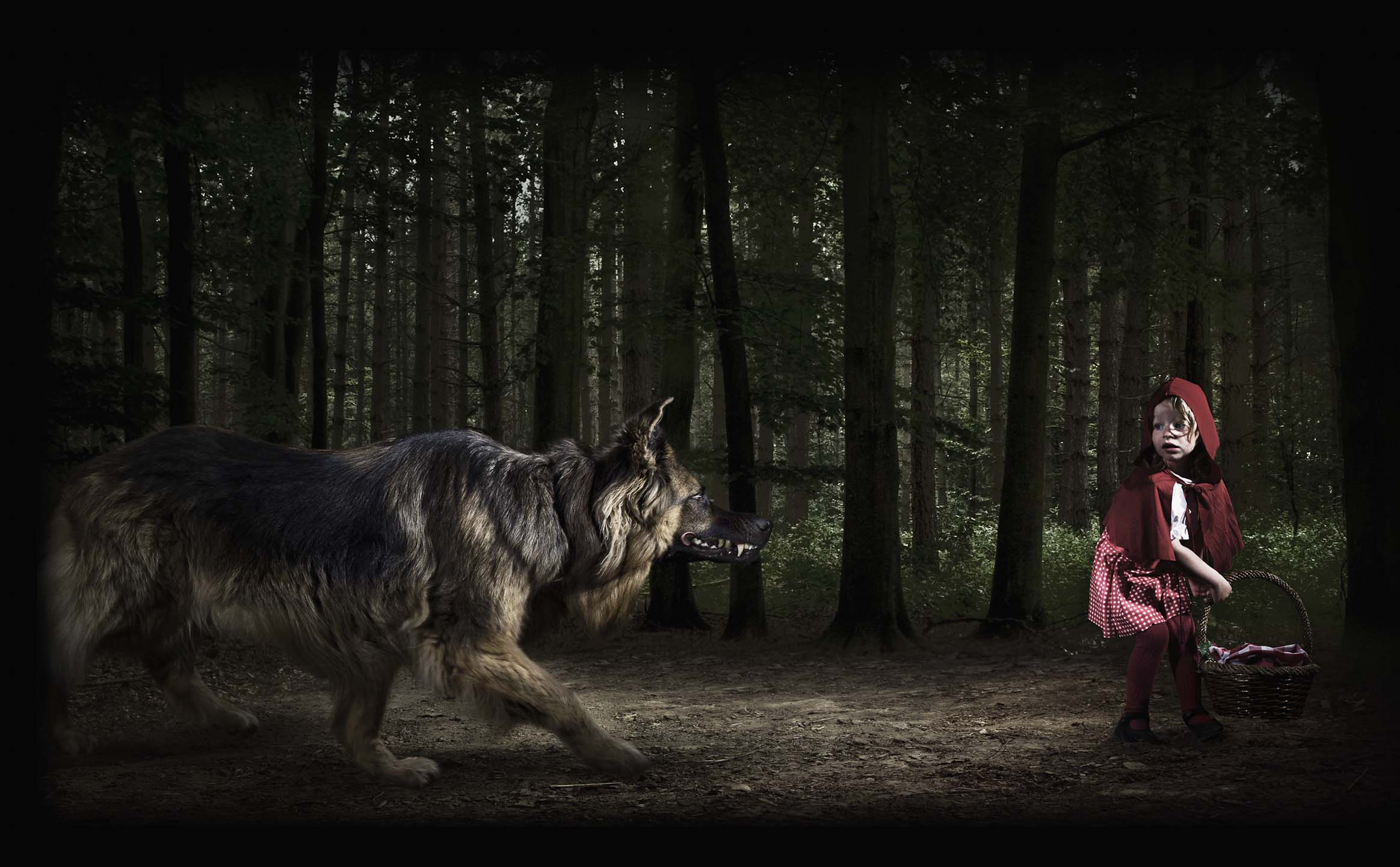 Alex Howe animals little red riding hood with wolf in dark forest
