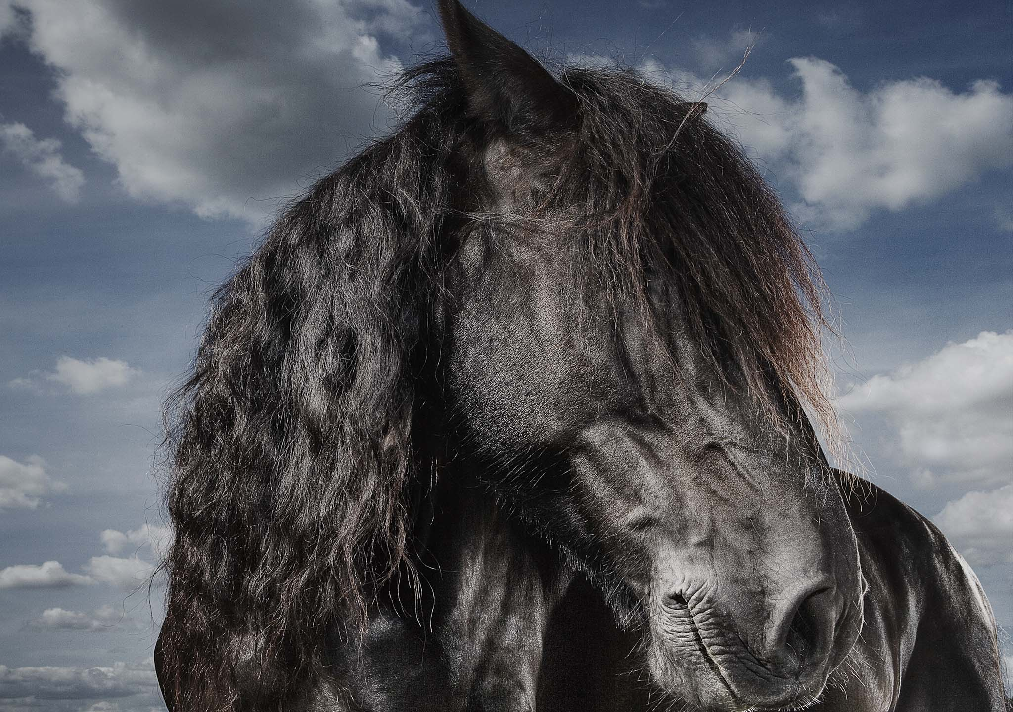Alex Howe animal black horse profile portrait with shaggy hair on face and moody clouds