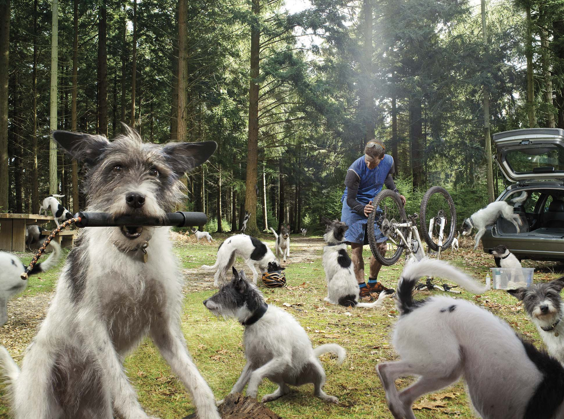 Alex Howe animal dogs in forest paying with owner preparing bicycle for cycling
