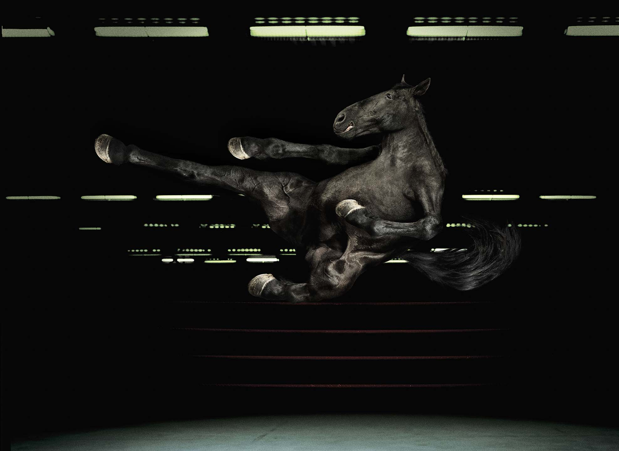 Alex Howe black horse kicking boxing smiling dark studio retouch