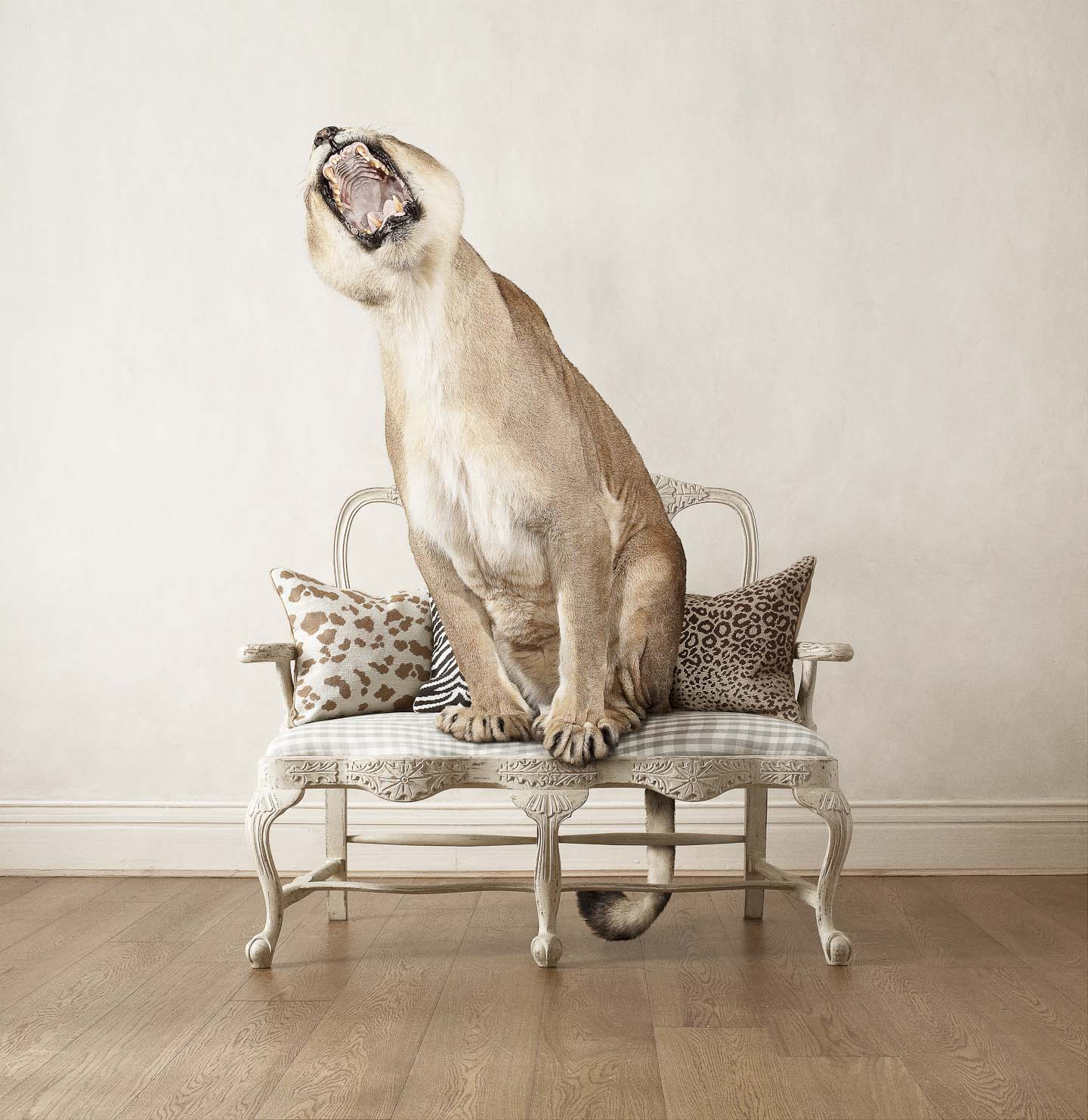 Alex Howe animal lioness roar chair interior hanging tail wallpaper