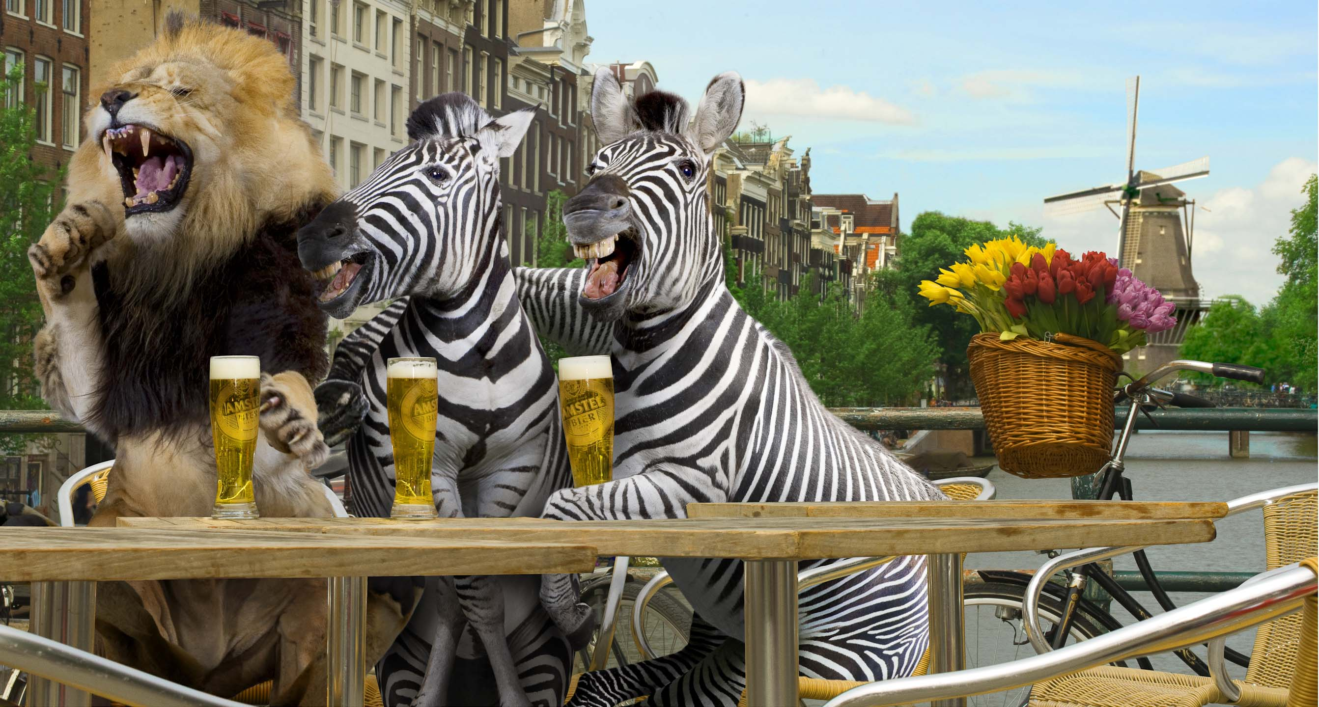 Alex Howe animal lion and zebra sharing pint in Amsterdam Holland by river laughing hunter prey friend