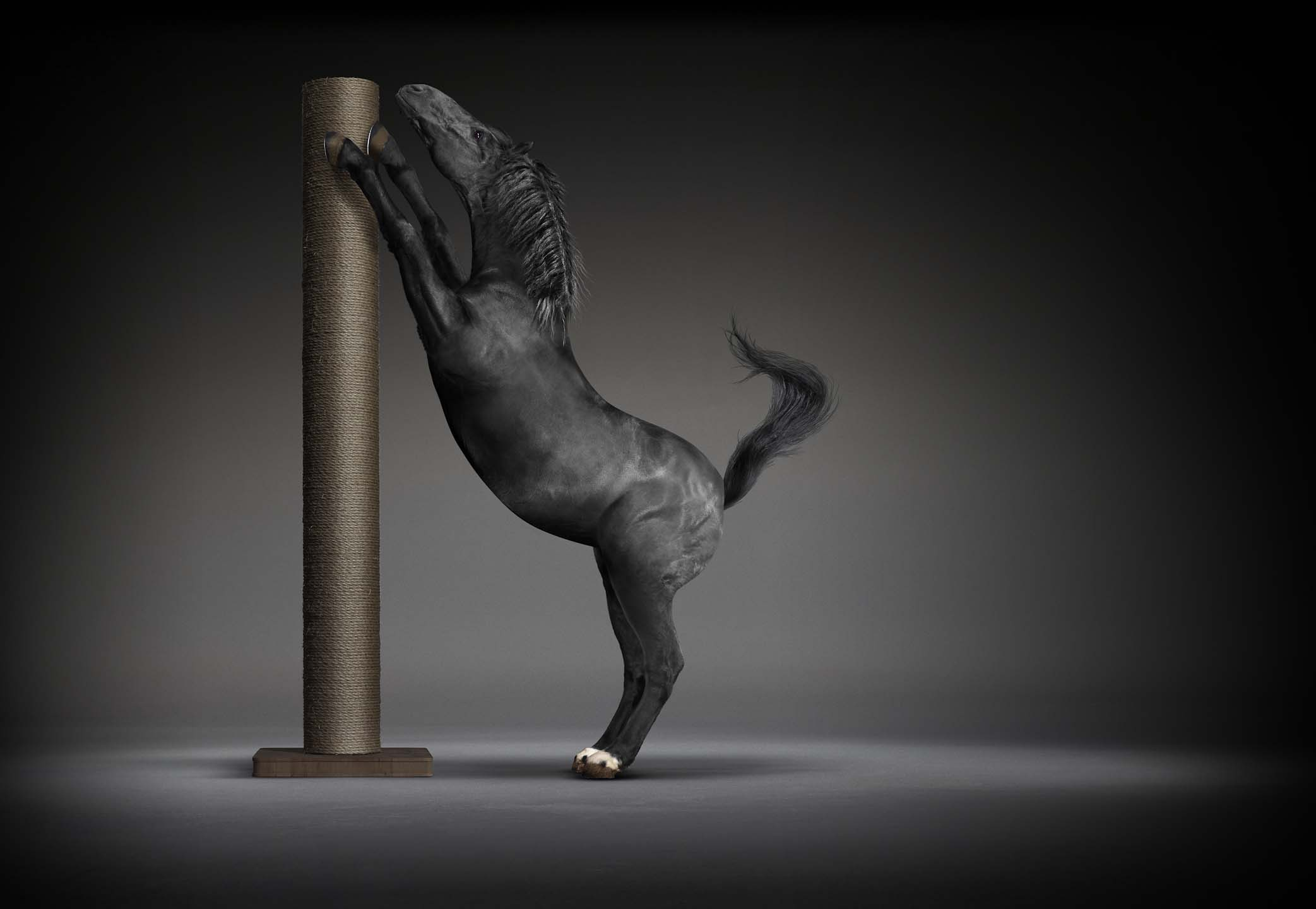 Alex Howe animal horse using cat scratcher in dark studio