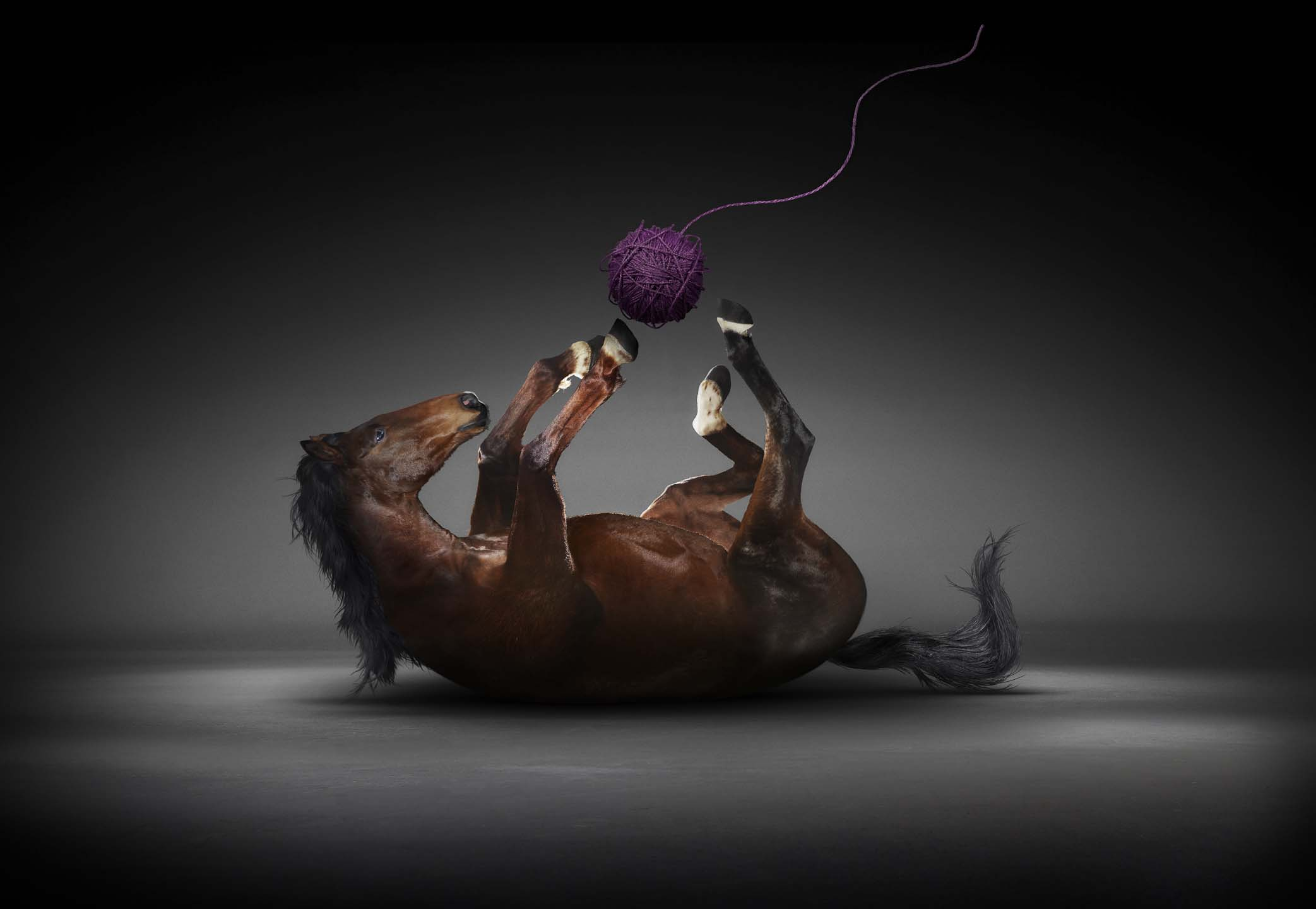 Alex Howe animal horse playing with string ball like cat in dark studio retouch