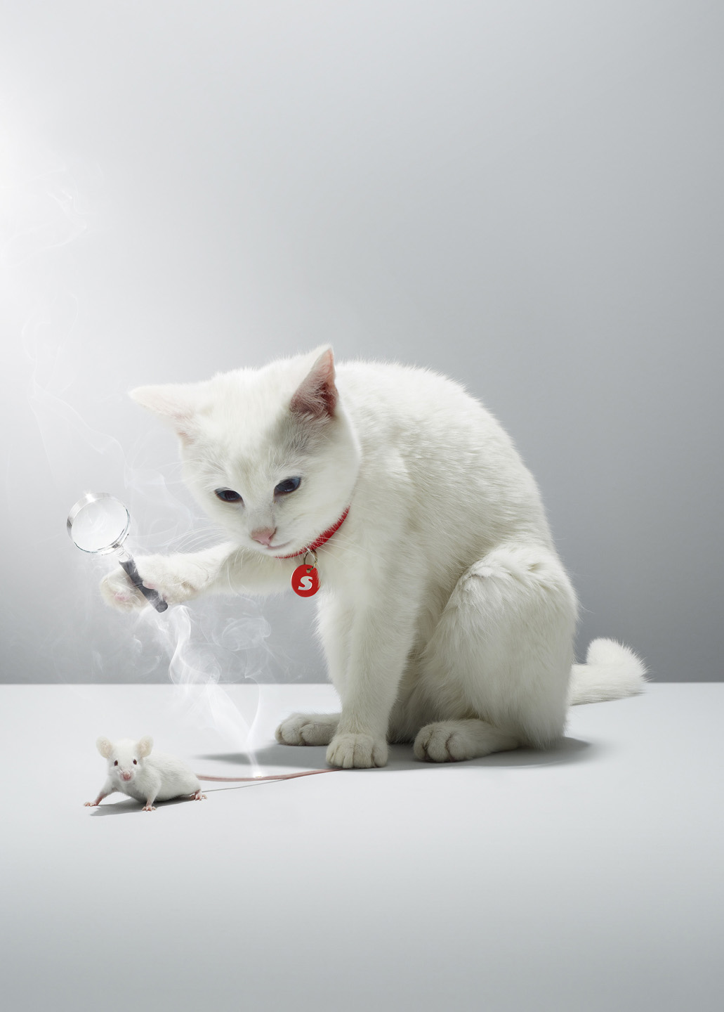 Alex Howe animal white cat focus torturing mouse trap tail game retouch