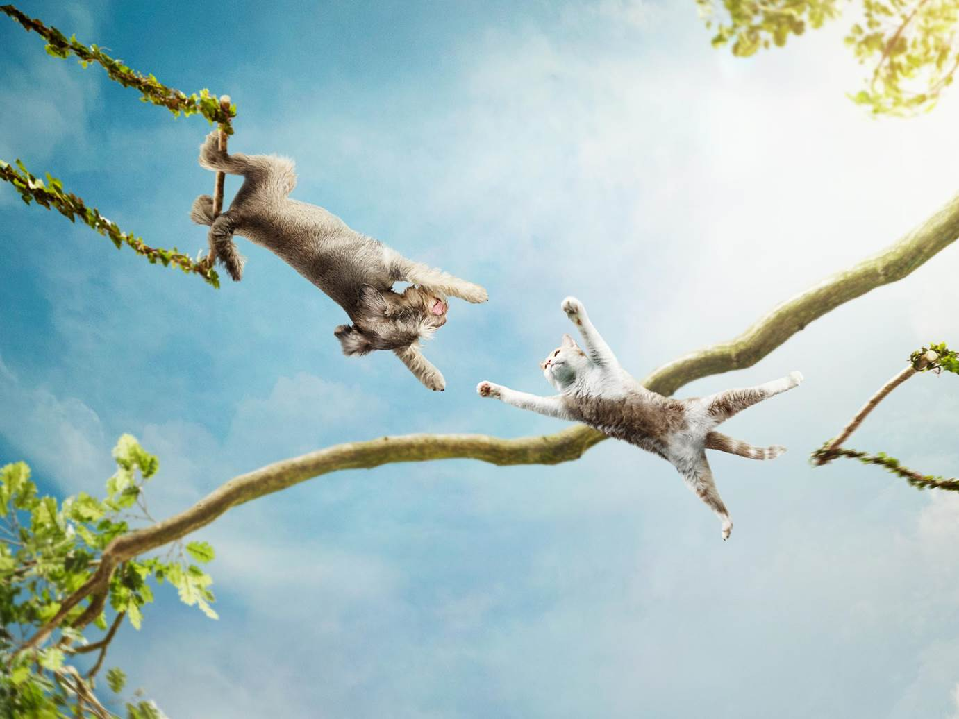 Alex Howe animals dog cat swinging in tree acrobatics retouch