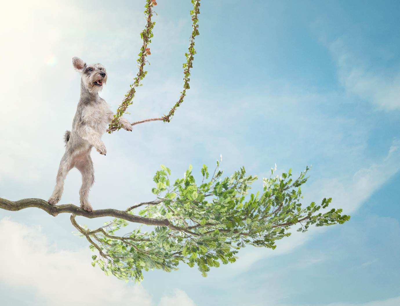Alex Howe animals dog in tree using swing with paws and smiling retouch